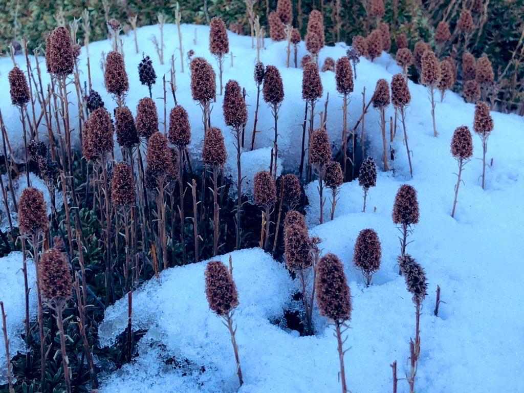 Desert flowers covered in snow on Turtlehead Peak