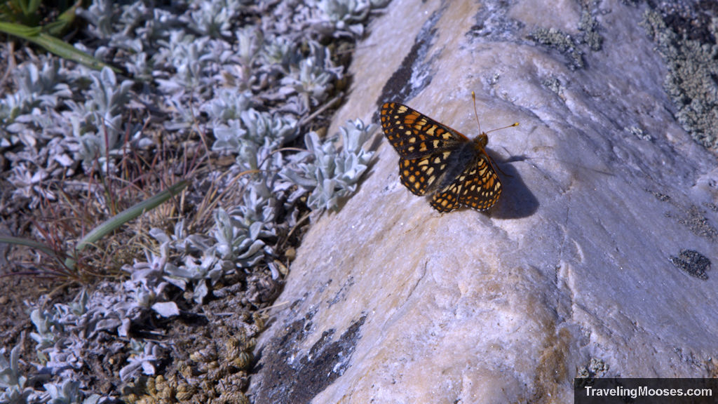 Orange and yellow butterfly at Lake Blanche