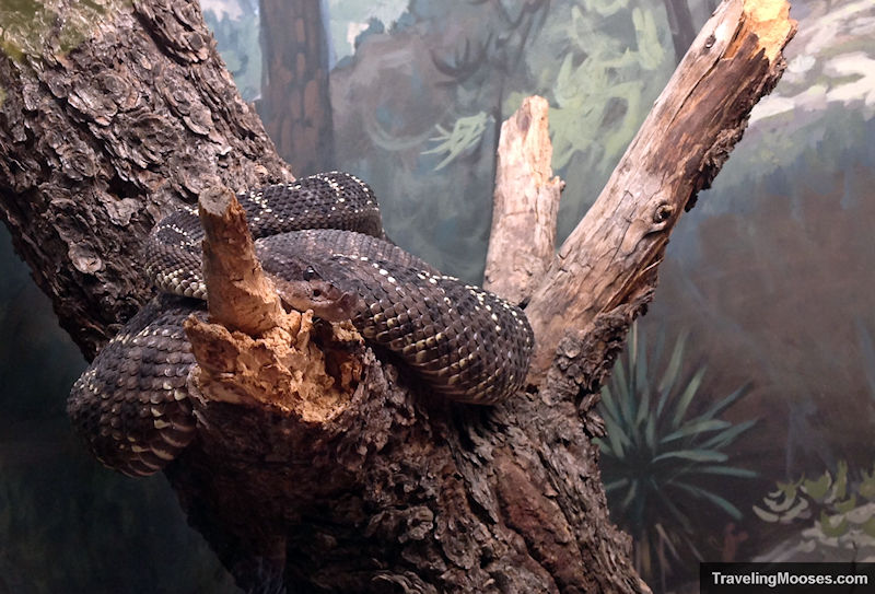Snake curled up on a log