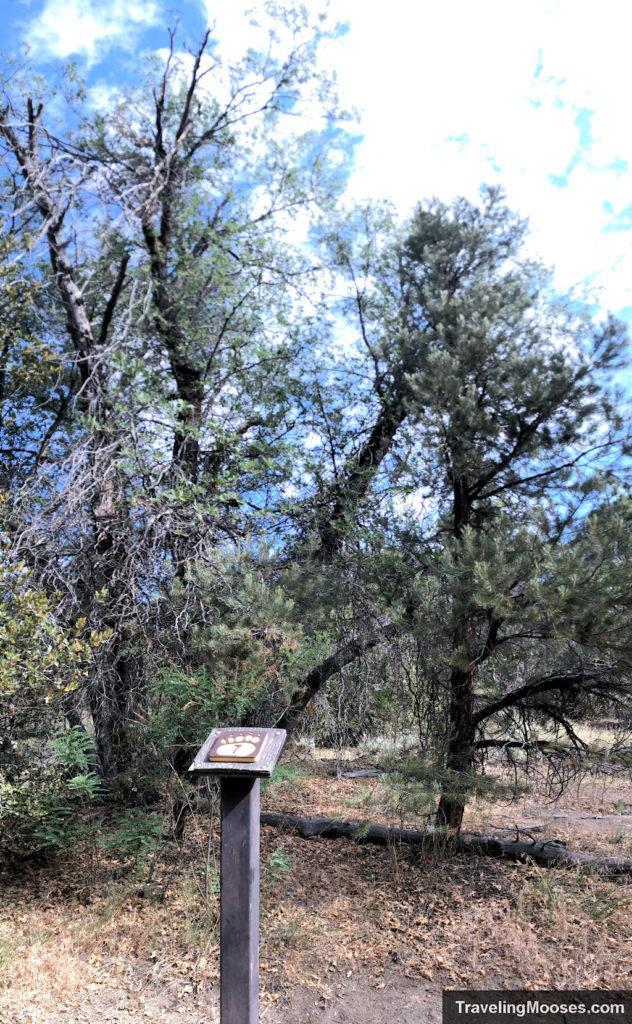 Interpretive Marker # 7 - Oak Trees