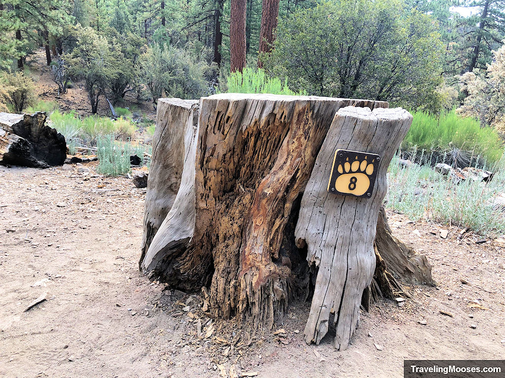 Interpretive Marker # 8 - Tree stump with age rings