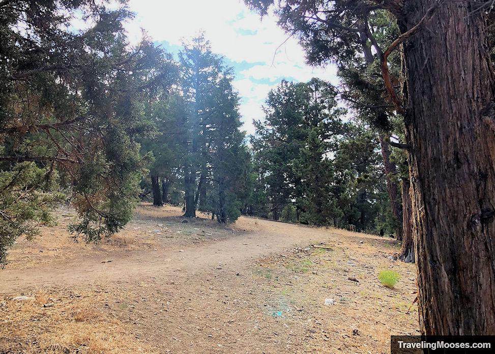 Start of the Woodland Interpretive Trail