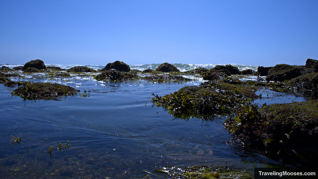 Tidal pools at Cabrillo National Monument