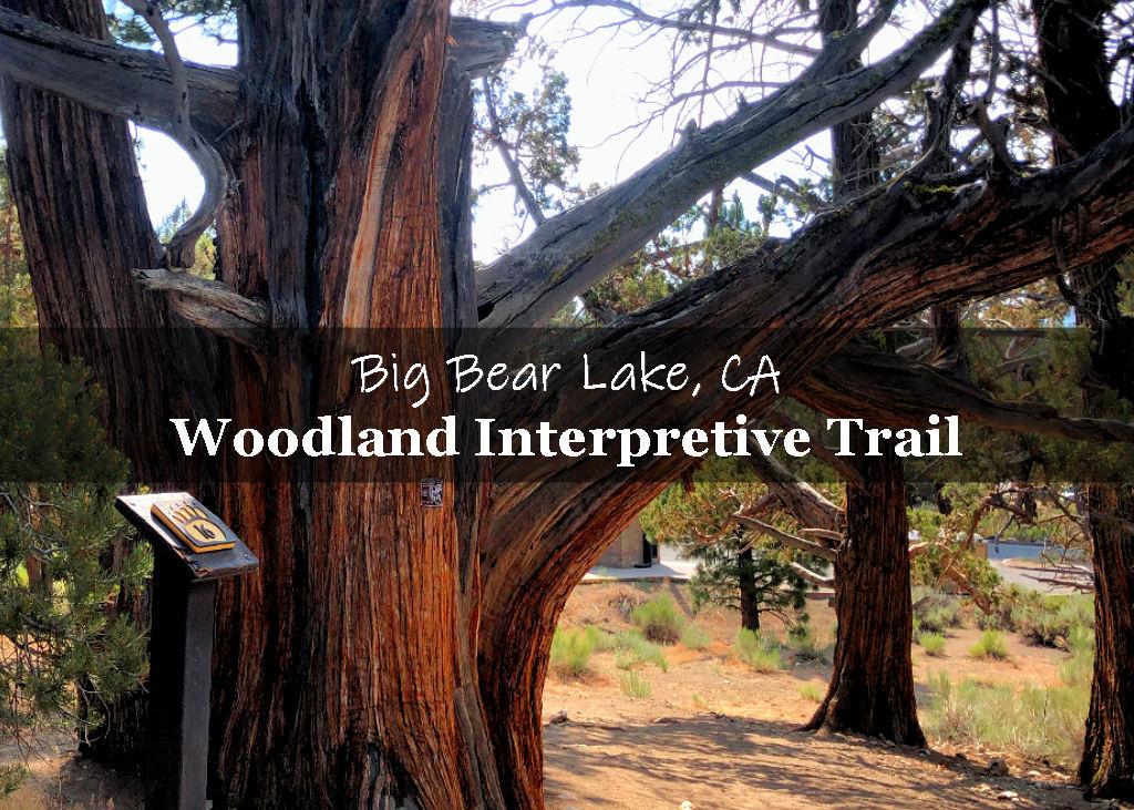 Woodland Interpretive Trail in Big Bear Lake