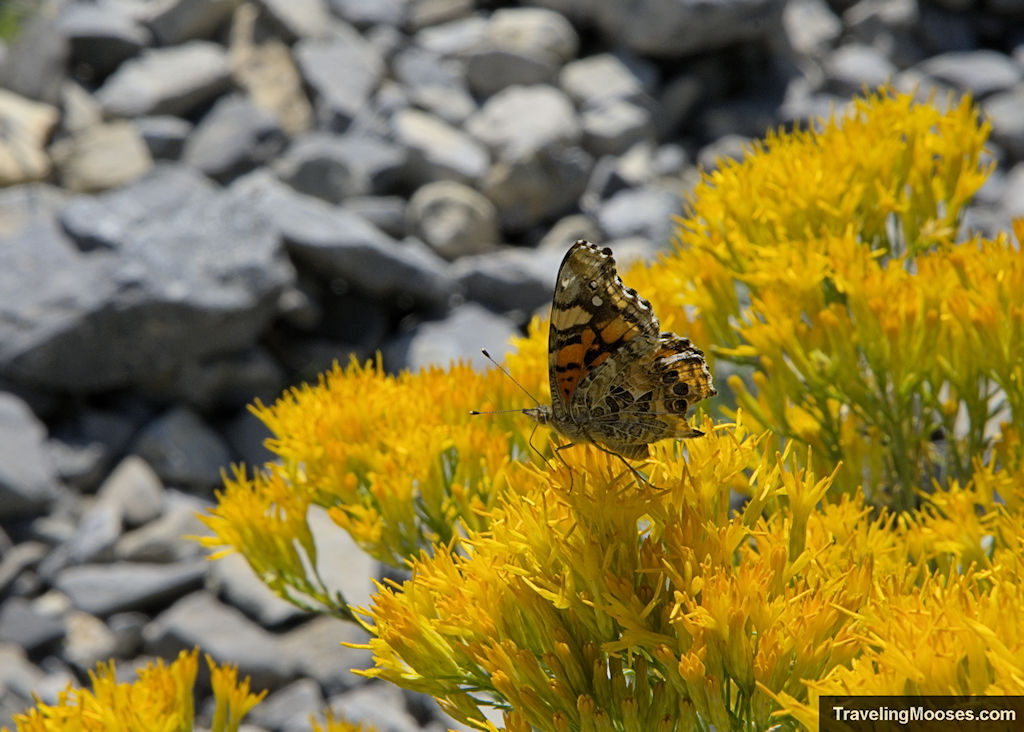 Butterfly on Cathedral Rock Trail