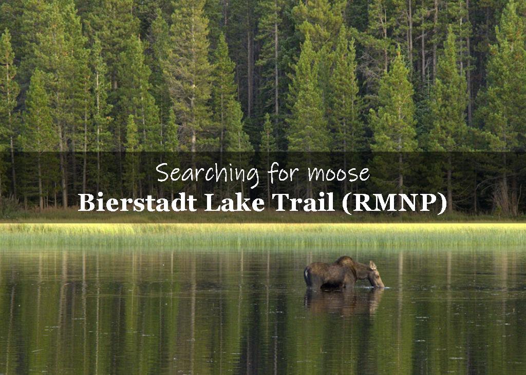 Bierstadt Lake Trail (RMNP)