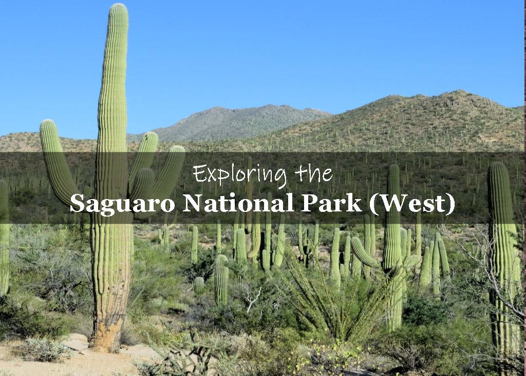Saguaros with Tucson Mountain range in the background
